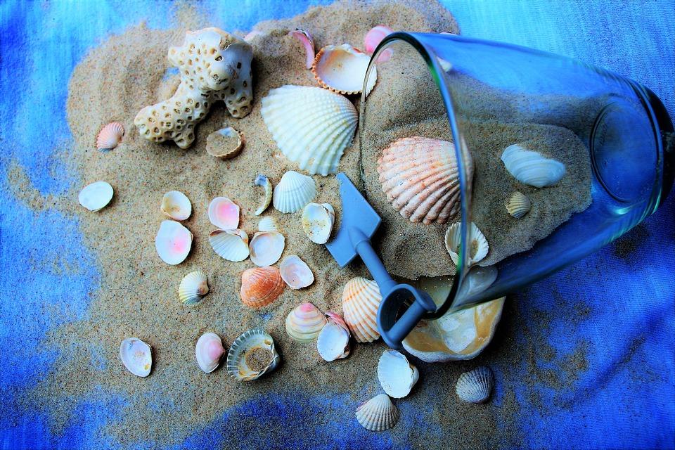 Seashell Divination