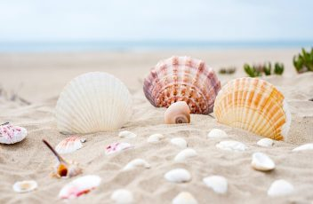 Seashell Magick